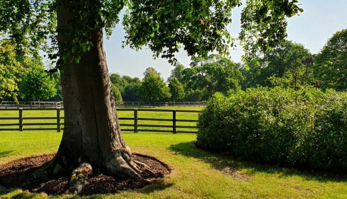 At Essex tree stump grinding we cover a large area of Essex, Suffolk, Cambridgeshire and Hertfordshire. We are fortunate…