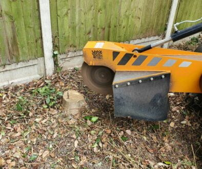 "Grinding tree stumps in ""Old Moulsham"", Chelmsford, Essex. There were a variety of trees stumps to be removed as the gar…"