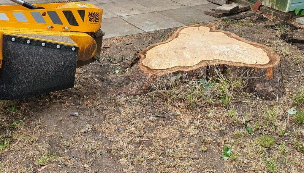 Removing a large eucalyptus tree stump in Rainham, Essex. The eucalyptus stump was around 42 inches (100 cm plus) in dia…