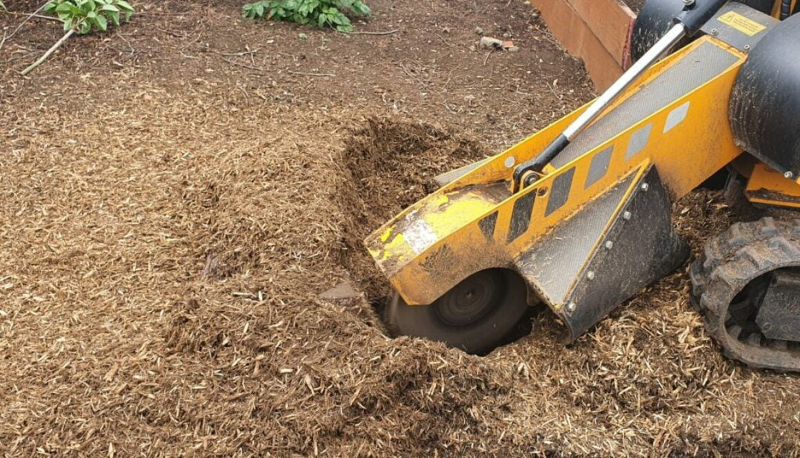 Stump grinding two large conifer tree stumps at Rainham, Essex. The tree stumps were removed to make way for a new large…
