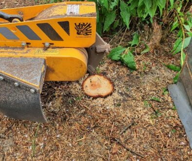 Tree stump grinding a variety of tree stumps, near Clare, Suffolk. We are here for all your tree stump removal needs. #S...