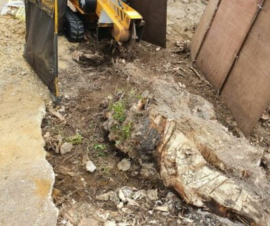 Working in Brentwood, Essex, this afternoon. We had a large ash tree stump which was approximately 6′ x 2′ wide, so fair…