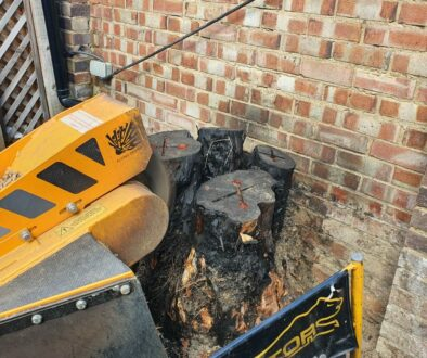 Working in Dagenham, Essex, grinding out some large conifer tree stump's. The customer had tried to burn and remove the …