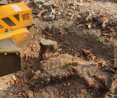 Another tree stump grinding job at Chigwell, near Epping, Essex. A large oak tree stump, and a small shrub root were rem...