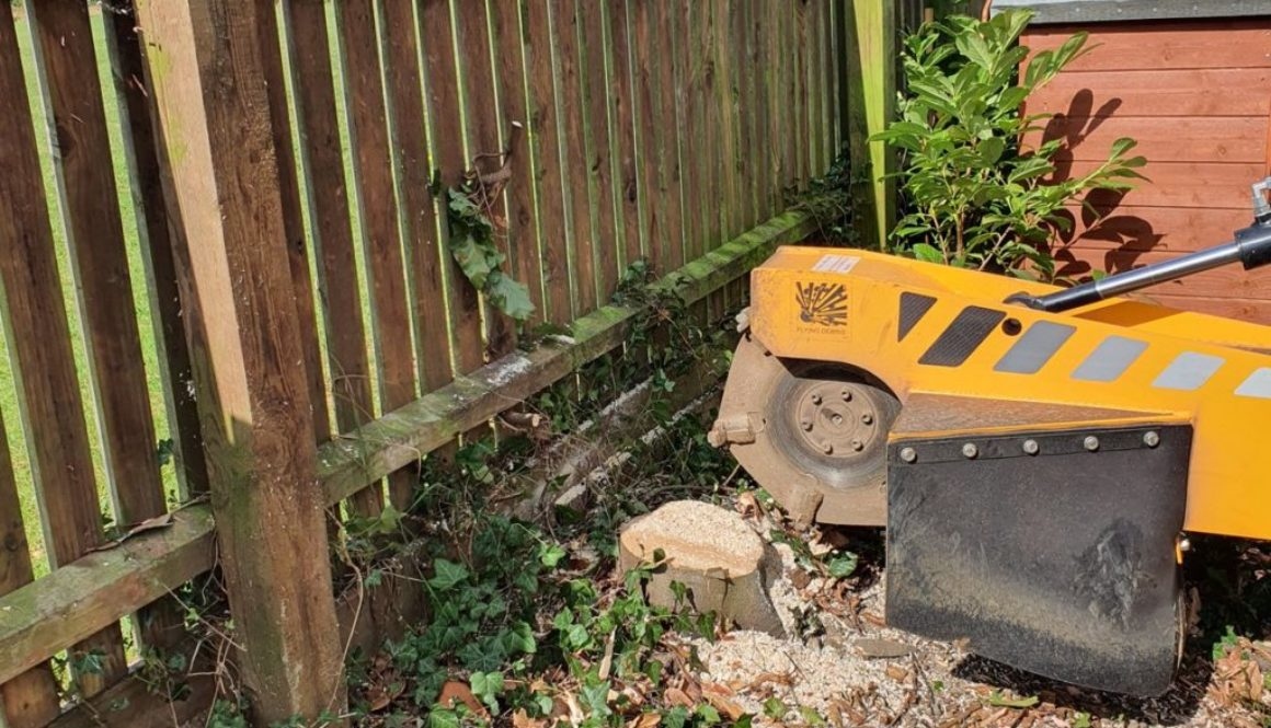More tree stump grinding in Cornish Hall End, Finchingfield, Essex. There were a number of various types of tree stump t...