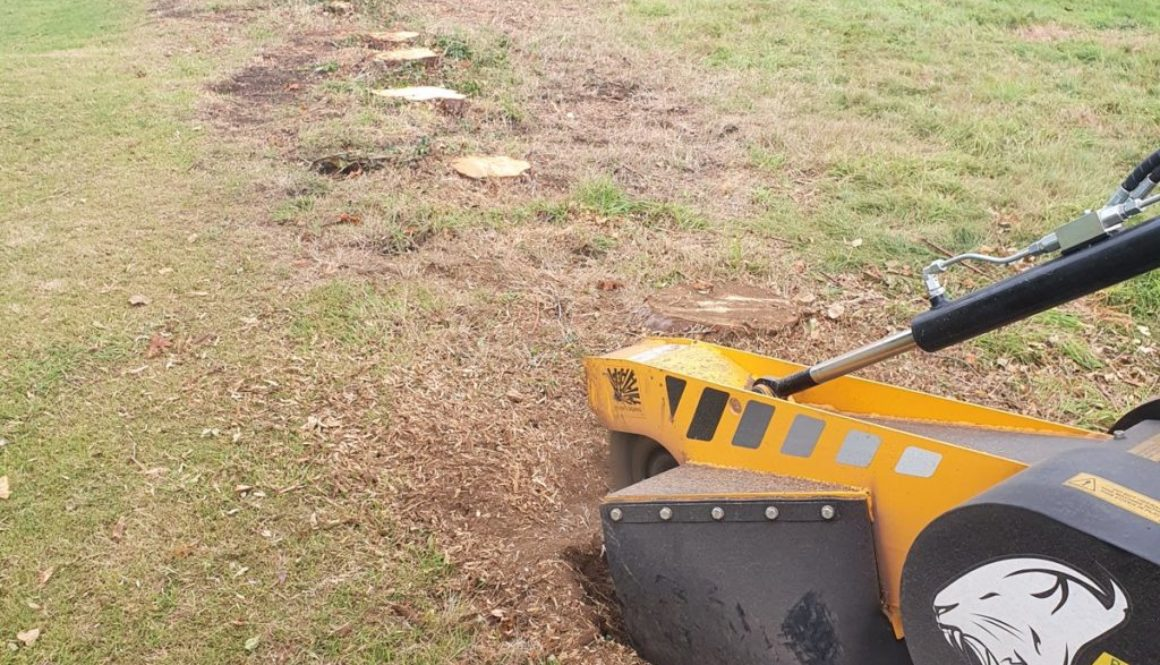 Tree stump grinding at Wethersfield, Hedingham, Essex. A row of 30 conifer tree stumps were removed to make way for a ne...