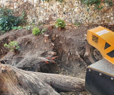 Tree stump grinding in Great Bardfield, Essex. This job was slightly different due to the fact that the tree stump was i...