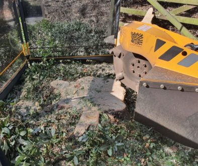 Tree stump grinding in Great Burstead near Billericay, Chelmsford, Essex. On this job, we had a number of sycamore tree ...