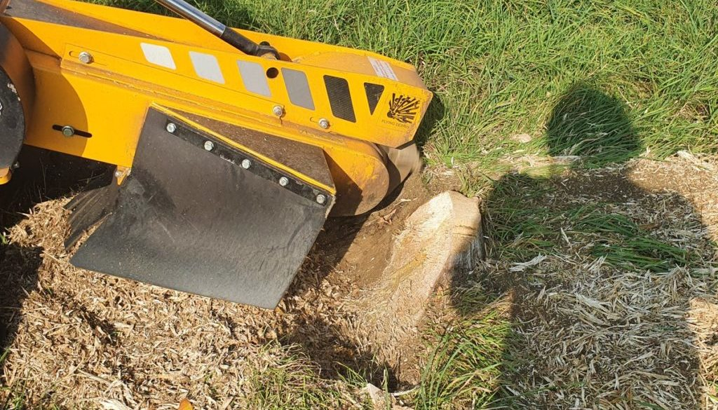 Tree stump grinding at Blackmore End, Wethersfield, Essex. A row of tree stumps were removed to make way for a new tradi...