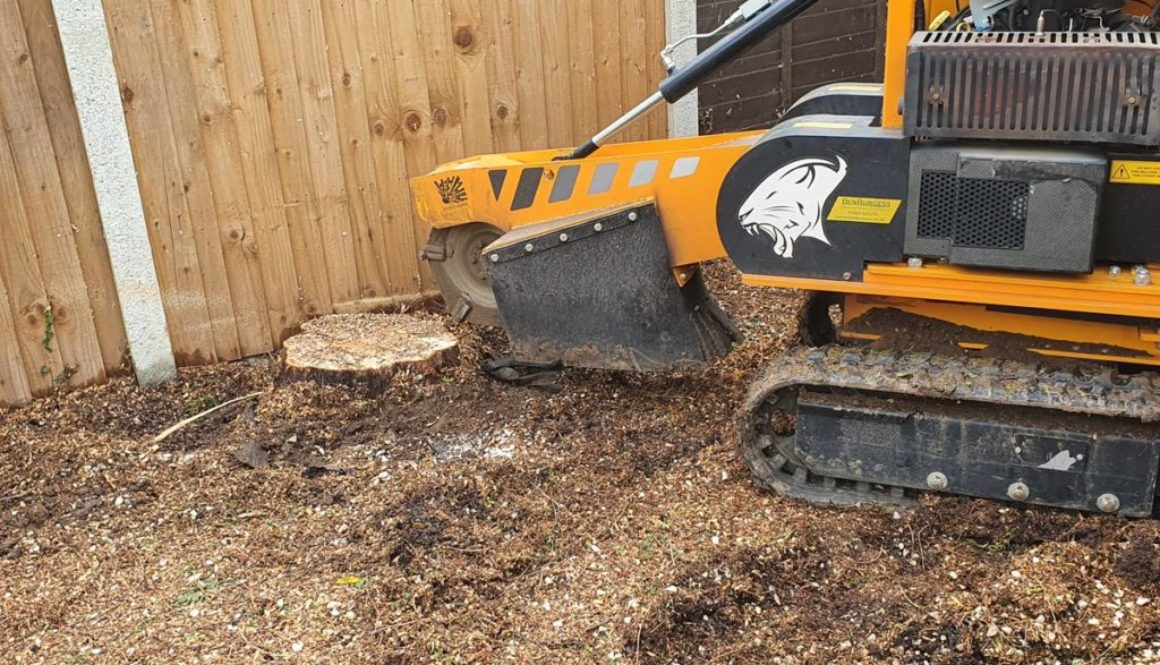 Tree stump grinding at Great Finborough, near Stowmarket, Suffolk. Grinding out a couple of conifer tree stumps to make ...