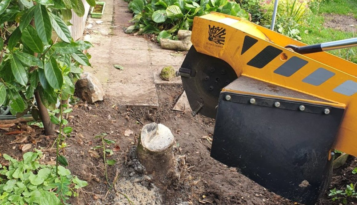 Tree stump grinding at Little Downham, Newmarket, Suffolk. Grinding out a Holly tree stump to make way for a new water m...