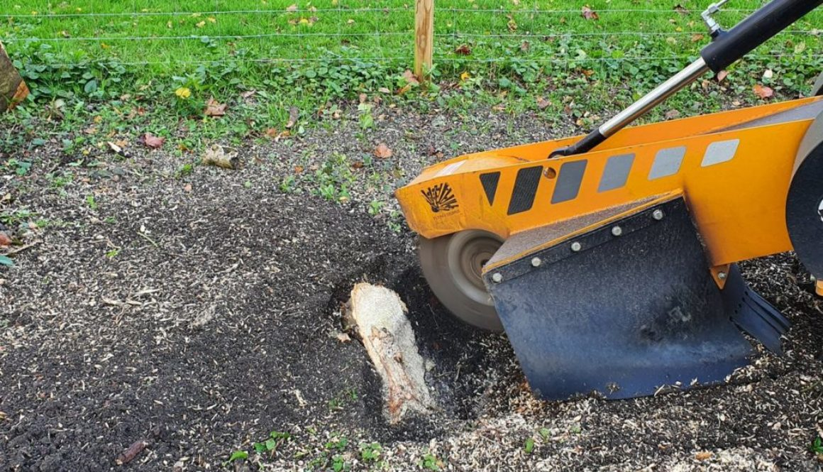 Tree stump grinding at Ringshall near Stowmarket, Suffolk. Grinding a variety of mixed tree stumps in preparation for a ...