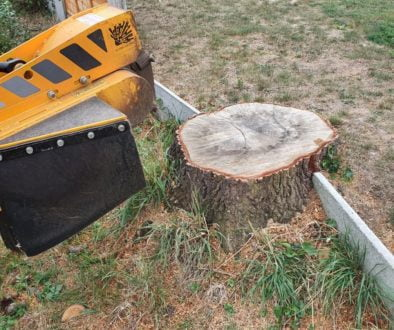 Tree stump grinding at St Lawrence, Tillingham, Essex. The overgrown area was cleared of trees and shrubs by a tree surg...