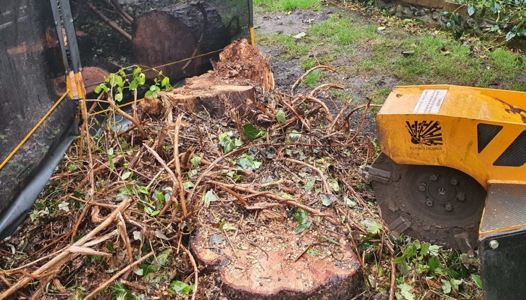 Tree stump grinding at Wethersfield near Hedingham, Essex. This is a large willow tree stump that I recently ground out,...