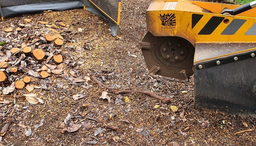 Tree stump grinding in Radwinter, Saffron Walden, Essex. I recently removed a large laurel stump which was multi-stemmed...