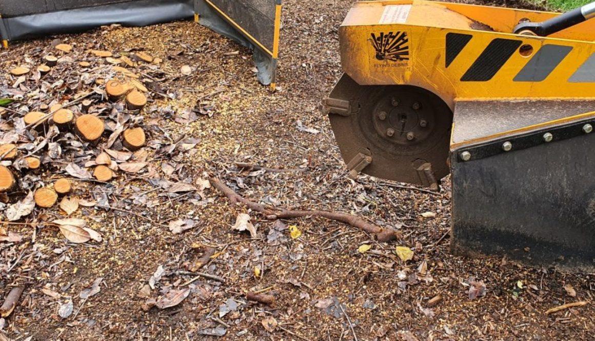 Tree stump grinding in Radwinter, Saffron Walden, Essex. I recently removed a large laurel stump which was multi-stemmed...