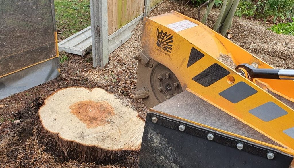 Tree stump grinding in Billericay, near Chelmsford, Essex, I have removed 8 stumps of different types of trees. #treestu...