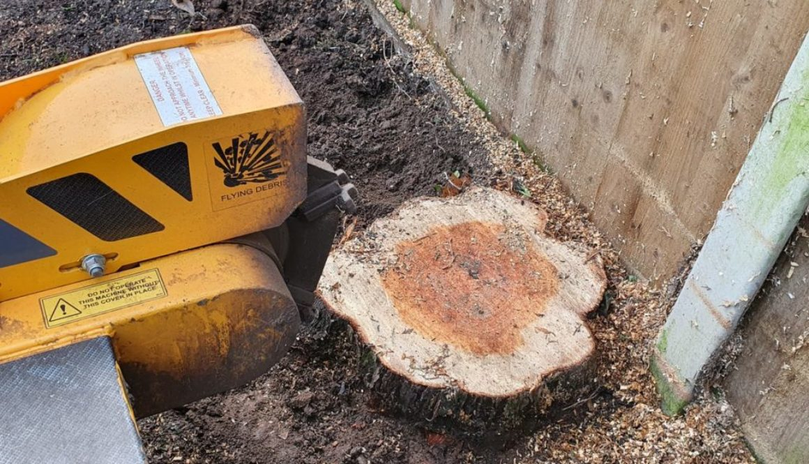 Tree stump grinding in Braintree, Essex. Four large conifer stump's to be removed. The conifers were literally taking up...