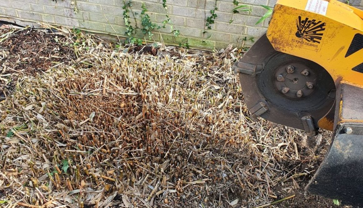 Tree stump grinding in Chelmsford, Essex. Recently removing a large clump of bamboo, the bamboo root was literally groun...