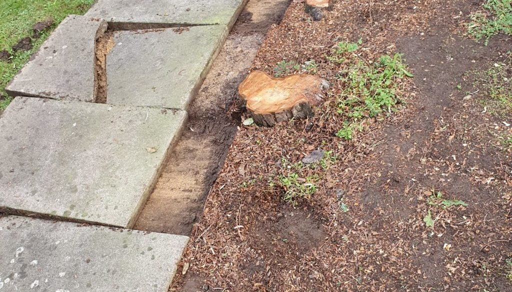 Tree stump grinding in Sturmer, near Haverhill, Suffolk. Grinding a few conifer stump's of various sizes, the concrete s...