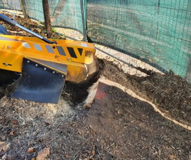 Tree stump grinding in Trumpington, near Cambridge. There were a number of various tree stumps ground out to make way fo...