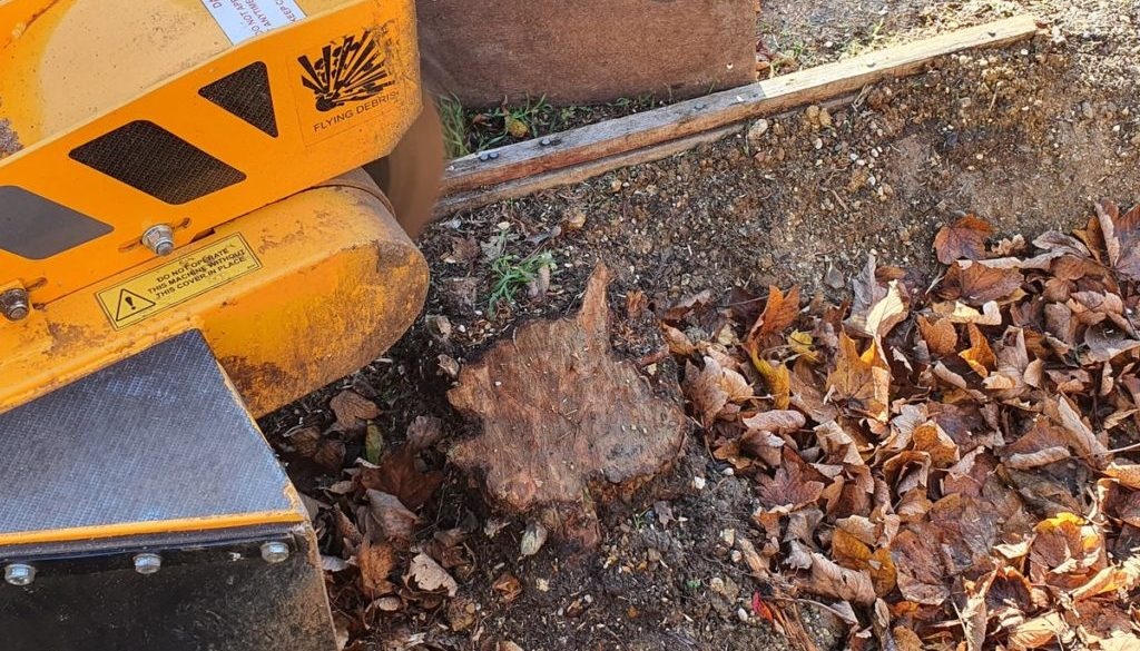 Tree stump grinding near Bishops Stortford, Essex. Removing a row of four conifer tree stumps in preparation to replant ...