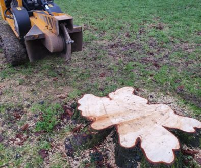 Grinding two large tree stumps at RobinHood End, near Stambourne, Halstead, Essex. These two tree stumps were close to e...