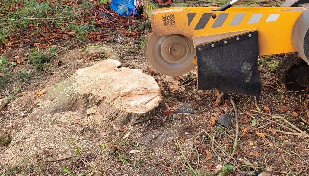 Recently removing tree stumps at Boreham, near Chelmsford, Essex. Here I am removing three conifer tree stumps in prepar...