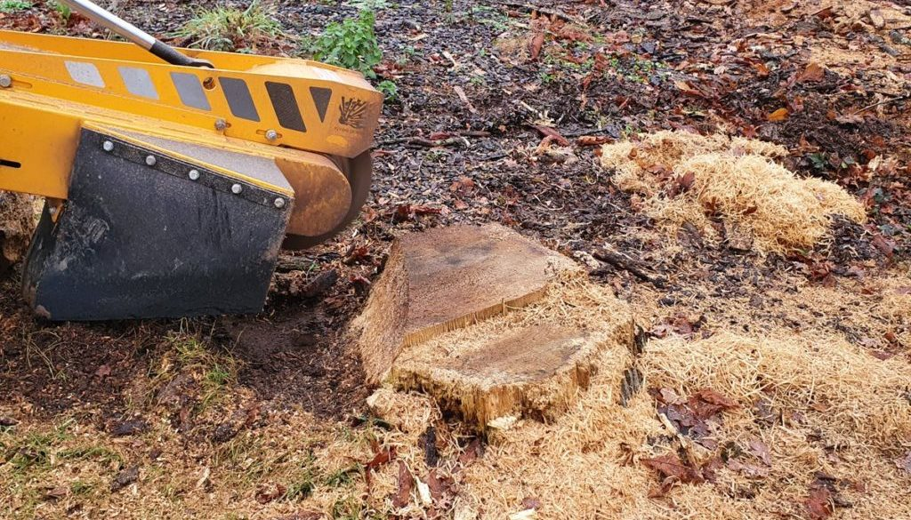 Recently removing tree stumps at Wickham Bishops near Maldon, Essex. I was removing a mixture of stumps from oaks to app...