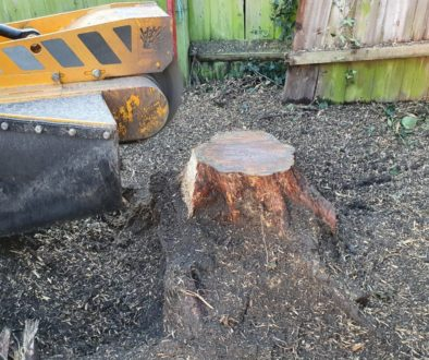 Removing 4 conifer tree stumps in Witham. Access was tight on this particular job, however, with our narrow width stump ...