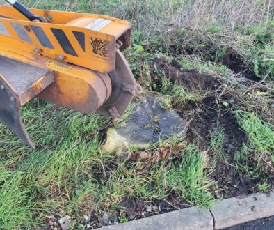Tree stump grinding at Witham, Essex, today. Removing a row of conifer stumps to make way for a new boundary fence. #tre...