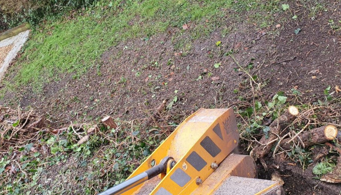 Tree stump grinding near Mountnessing, Ingatestone, Essex. This was an old hedgerow that was removed in preparation for ...