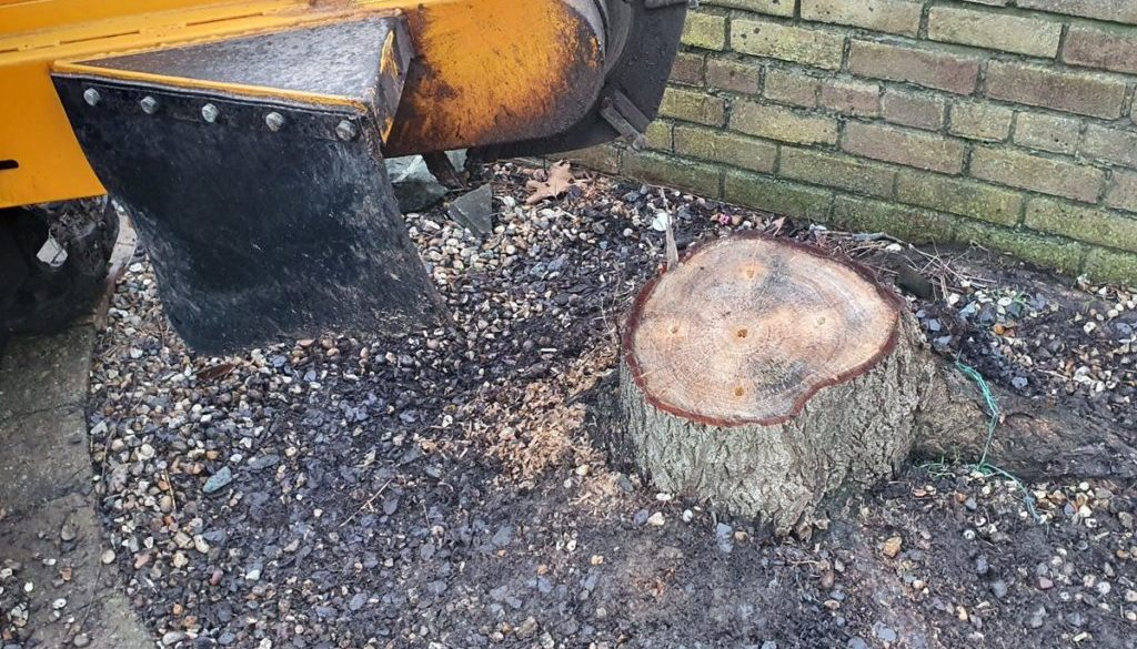 Tree stump grinding near Theydon Mount, near Epping, Essex. Removing one willow stump that was lifting the block paving....