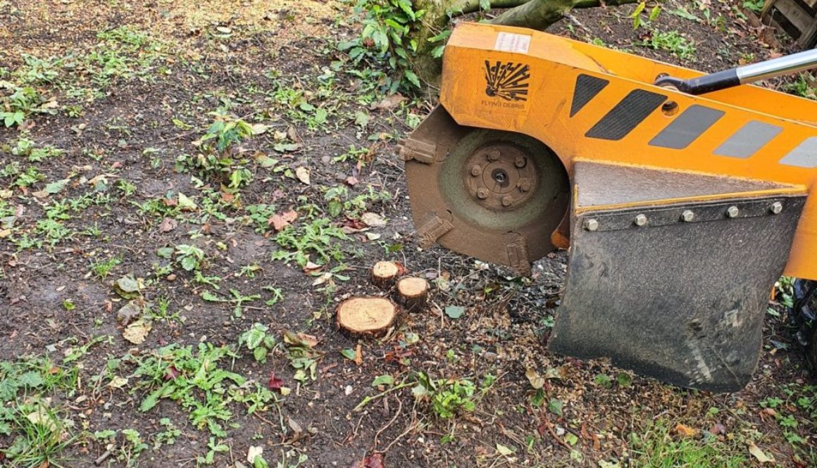 Tree stump grinding at Battisford, Bildeston, near Stowmarket, Suffolk. Here I was working in a large area that had nume...
