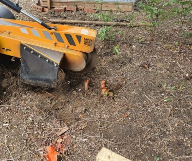 Tree stump grinding at Darmsden, Needham Market, near Stowmarket, Suffolk. Here I had a mixture of tree stump scattered ...