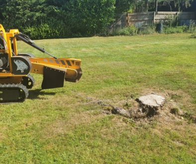 Tree stump grinding at Hitcham, Bildeston, near Stowmarket, Suffolk. There was a selection of stumps in the main lawn wh...
