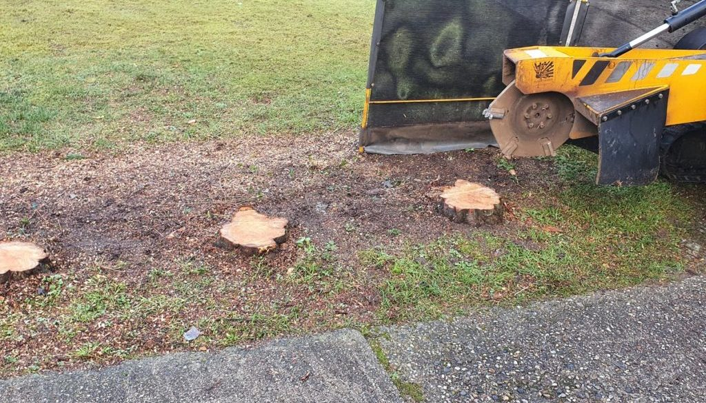 Tree stump grinding in Sturmer, near Haverhill, Suffolk. Two rows of conifer stumps removed to make way for a new fence....