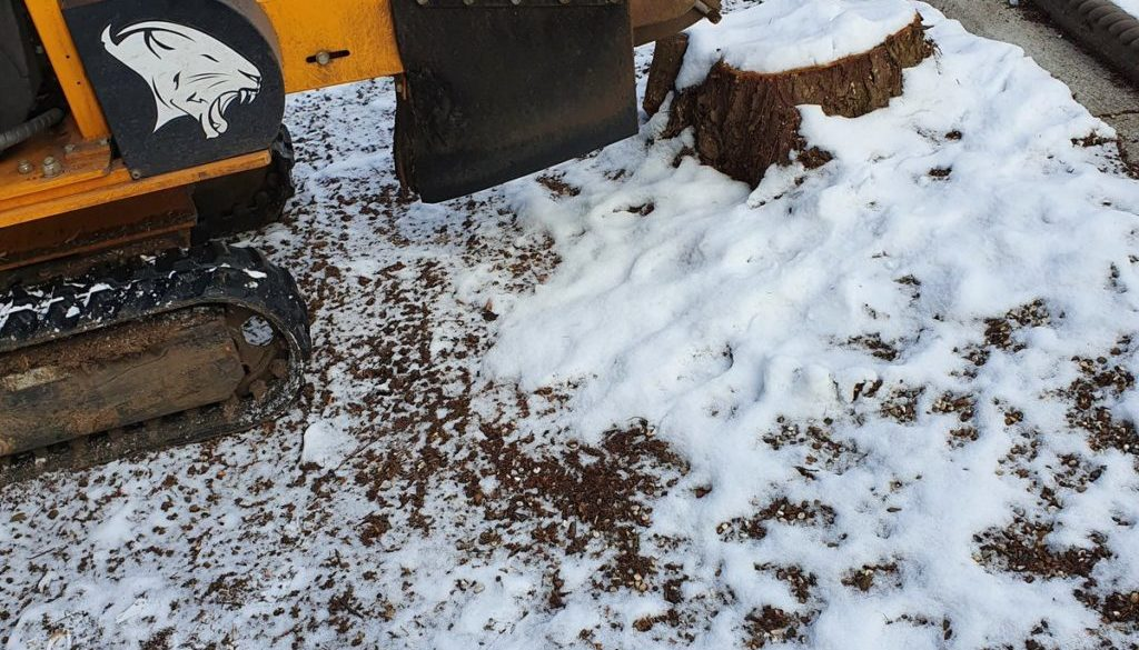 Tree stump grinding in the snow at Great Warley, near Brentwood, Essex. Removing four large conifer tree stumps, ready f...