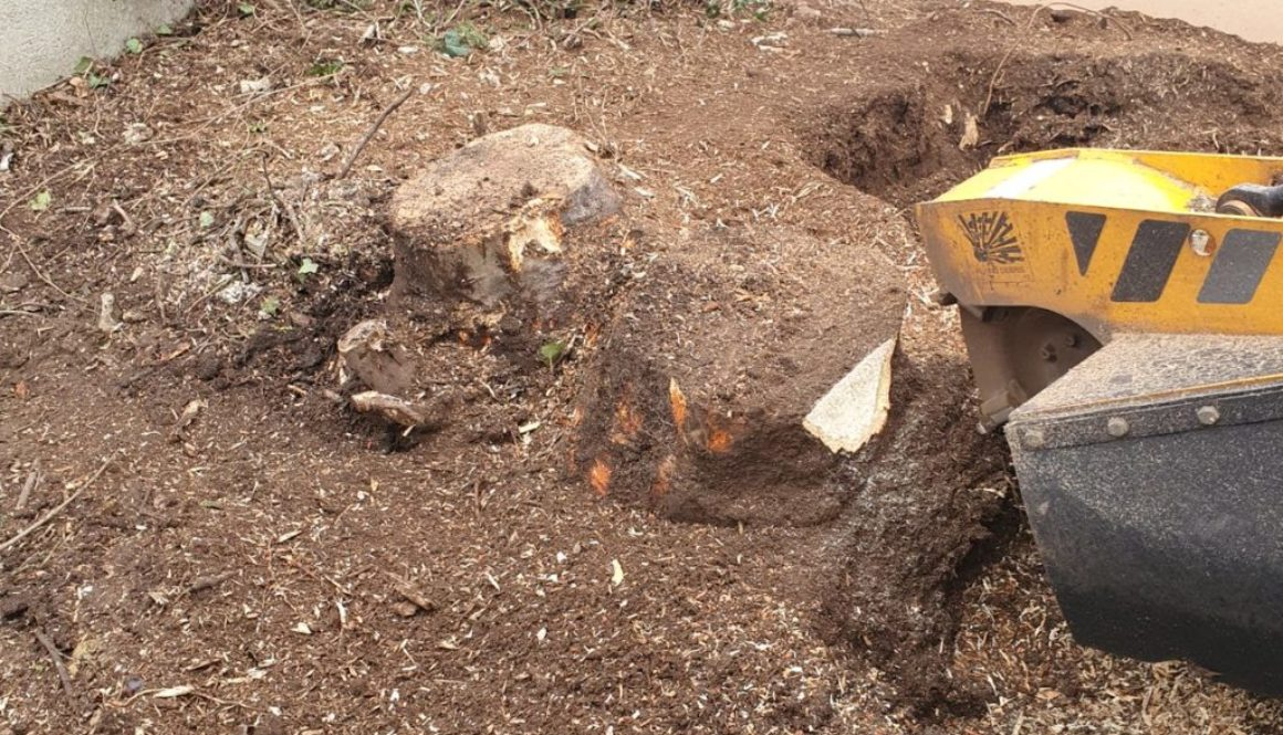 Tree stump grinding at Buntingford, Hertfordshire. There were a number of various tree stump's that needed removing in p...
