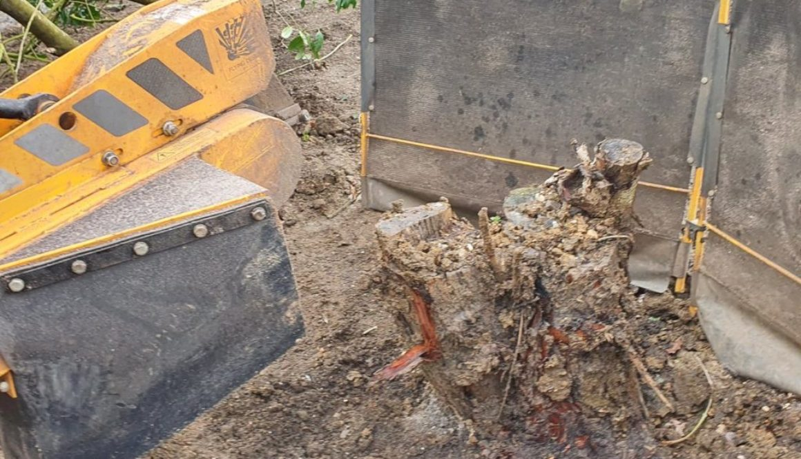 Tree stump grinding near Maldon, Heybridge, Essex. The tree stump was removed in preparation for the a landscaping proje...