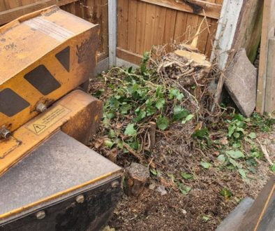 Grinding out a mixture of tree stumps in Terling, near Hatfield Peverel, Essex. The garden was being totally re-landscap...