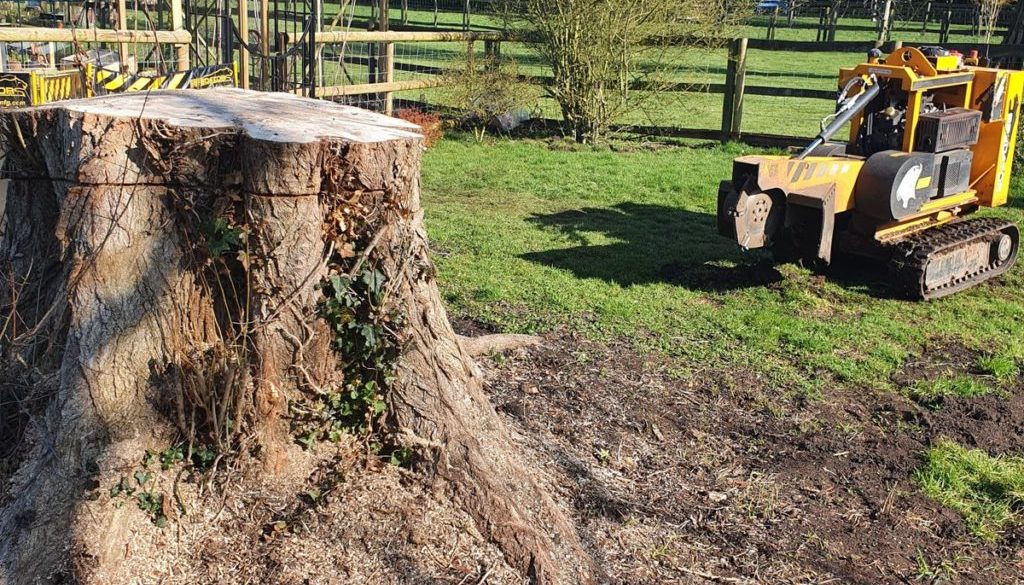 The tree stump is now ground out fully at Little Bardfield, Thaxted, Essex. There are two piles of woodchip and woodchip...