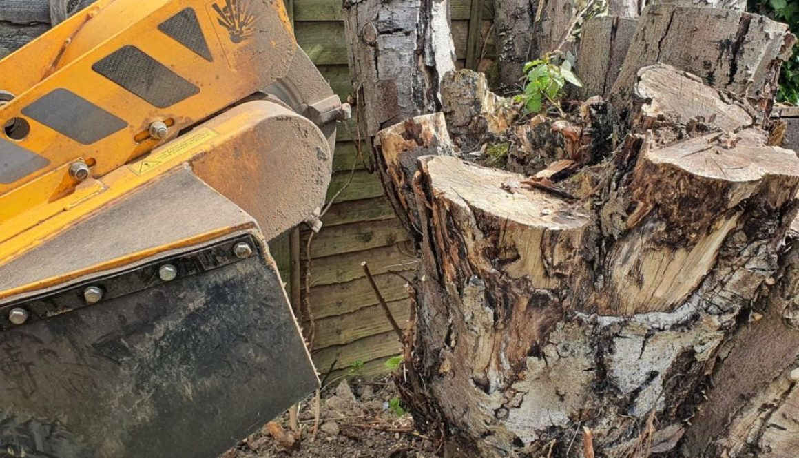Tree stump grinding in Bishop's Stortford, Hertfordshire. This was a taller than normal tree stump, however, the stump g...
