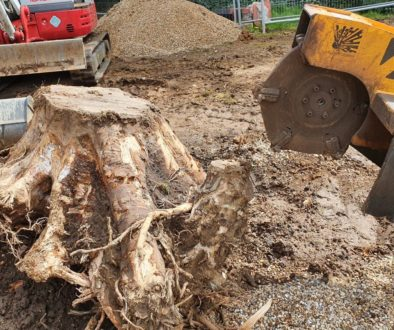 Grinding out tree stumps at Bishops Stortford, Herts. The tree stumps had already been removed with a large excavator, h...