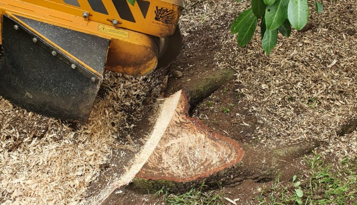 Tree stump grinding at Downham, new Billericay, Chelmsford, Essex. Here we had a mixture of tree stumps that needed to b...