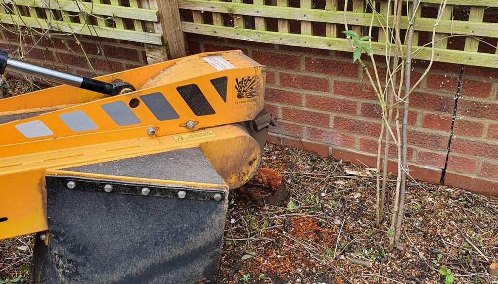 Tree stump grinding at Ford End, near Great Dunmow, Essex. Here we had a mixture of stumps to remove in preparation for ...