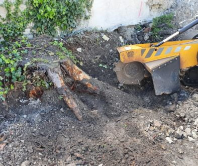 Tree stump grinding in Melbourne, near Royston, Hertfordshire. This was a large conifer stump that was close to a wall o...