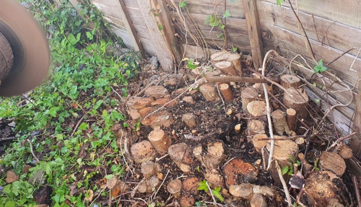 Tree stump grinding in Sudbury, Suffolk, today. Here we have a large hazel stump that has been totally removed. It was a...