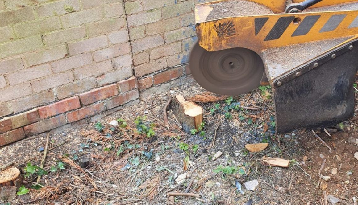 Tree stump grinding near Chingford, Epping, Essex. Here a row of conifer tree stump's are being removed to make the erec...
