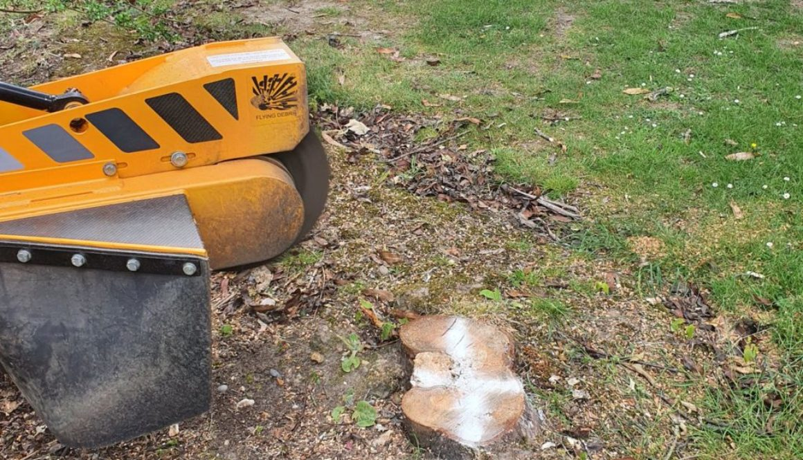 Tree stump grinding near Ingatestone, Chelmsford Essex. Here I was grinding various tree stumps including a large horse ...